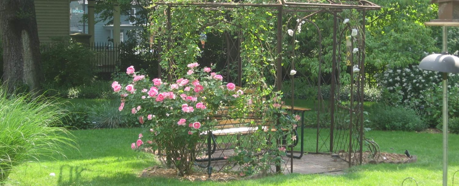 Garden gazebo with seating space beneath in the yard rose bush beside it and vines covering half the structure